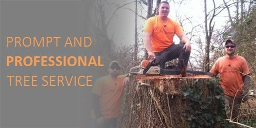 Tree Service owner in Knoxville TN