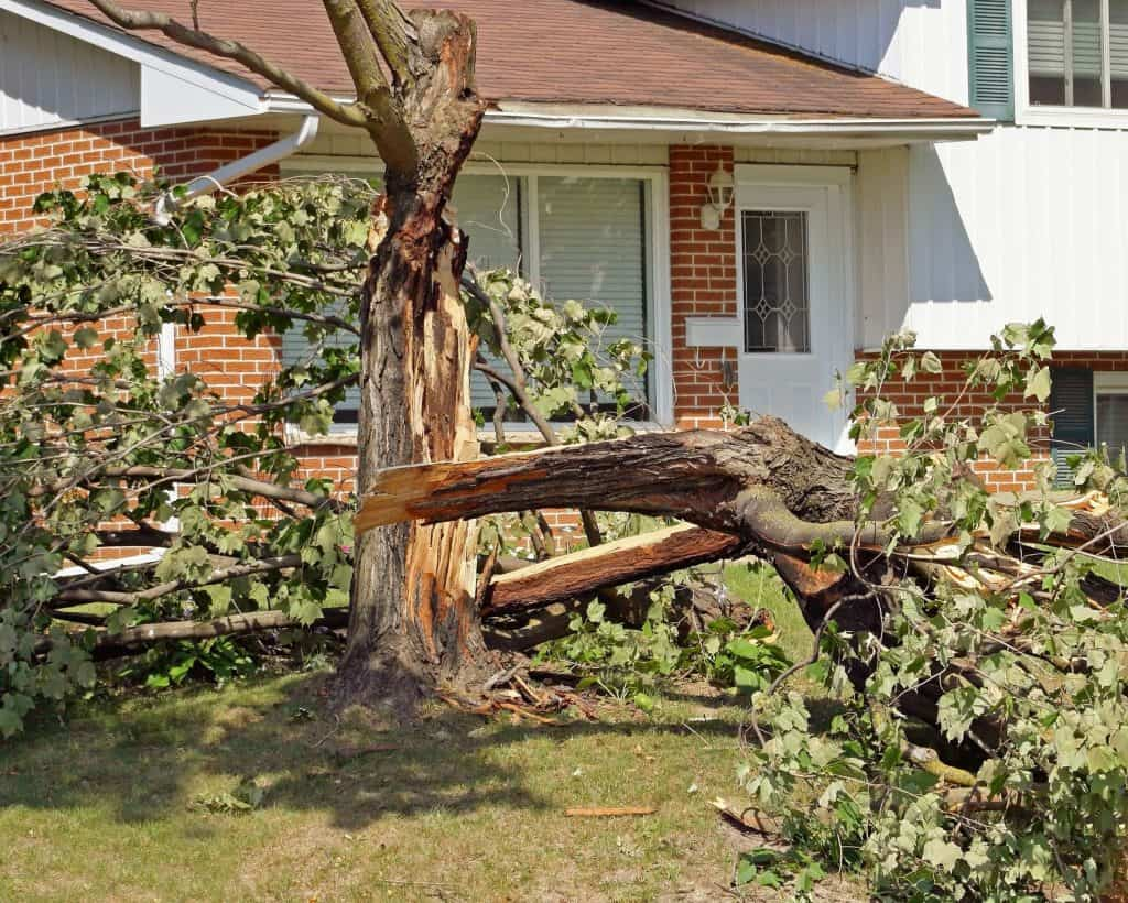 best local tree service in knoxville tn