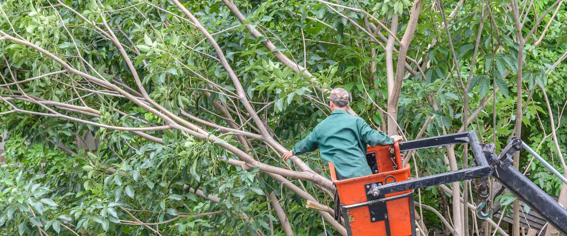 how-much-to-remove-a-tree-in-knoxville-tn